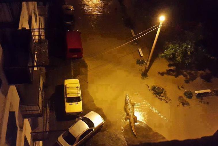 Наводнение в Тбилиси: по улицам плавают крокодилы и ходят носороги (фото)