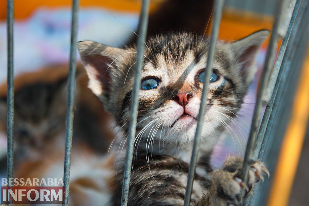 """В Измаиле """"Котопес"""" ежедневно передает бездомных животных в хорошие руки"""