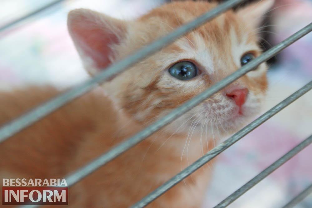 """IMG_0294 В Измаиле """"Котопес"""" ежедневно передает бездомных животных в хорошие руки"""