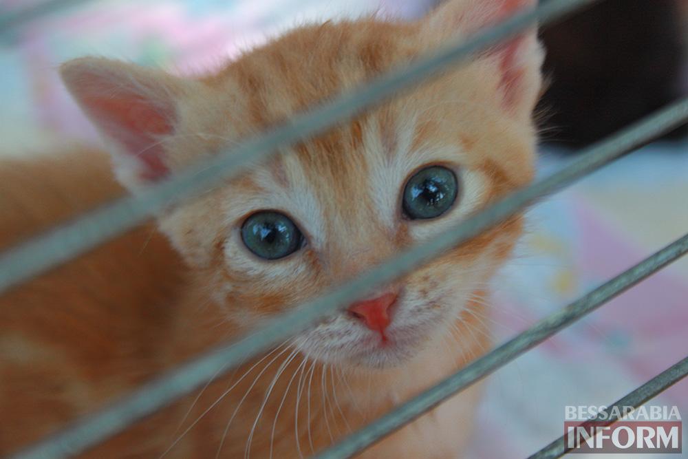 """IMG_0296 В Измаиле """"Котопес"""" ежедневно передает бездомных животных в хорошие руки"""