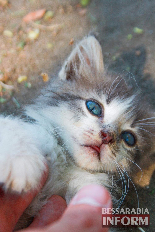 """IMG_0301 В Измаиле """"Котопес"""" ежедневно передает бездомных животных в хорошие руки"""