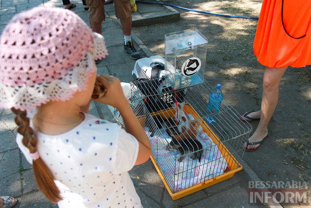"""IMG_0305 В Измаиле """"Котопес"""" ежедневно передает бездомных животных в хорошие руки"""