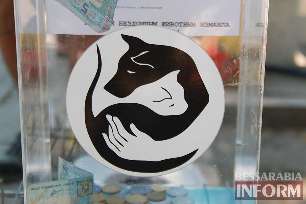 """IMG_0308 В Измаиле """"Котопес"""" ежедневно передает бездомных животных в хорошие руки"""