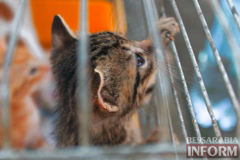 """IMG_0309 В Измаиле """"Котопес"""" ежедневно передает бездомных животных в хорошие руки"""