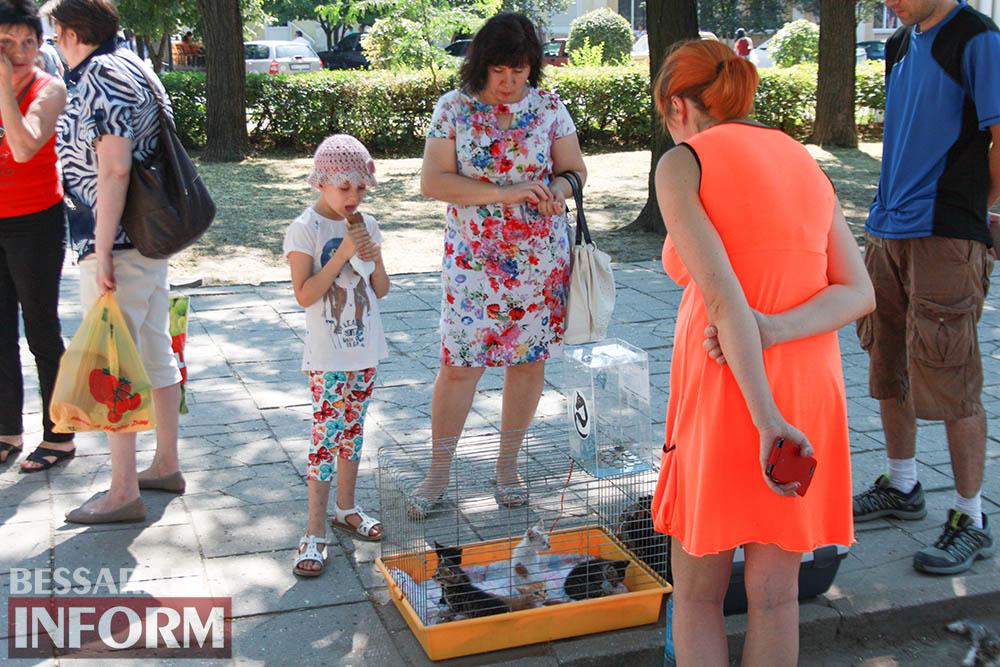 """IMG_0314 В Измаиле """"Котопес"""" ежедневно передает бездомных животных в хорошие руки"""