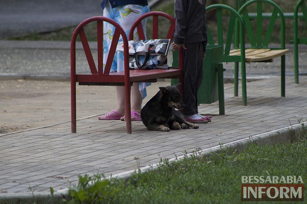 IMG_9569 Проблема бездомных собак в Измаиле пущена на самотек
