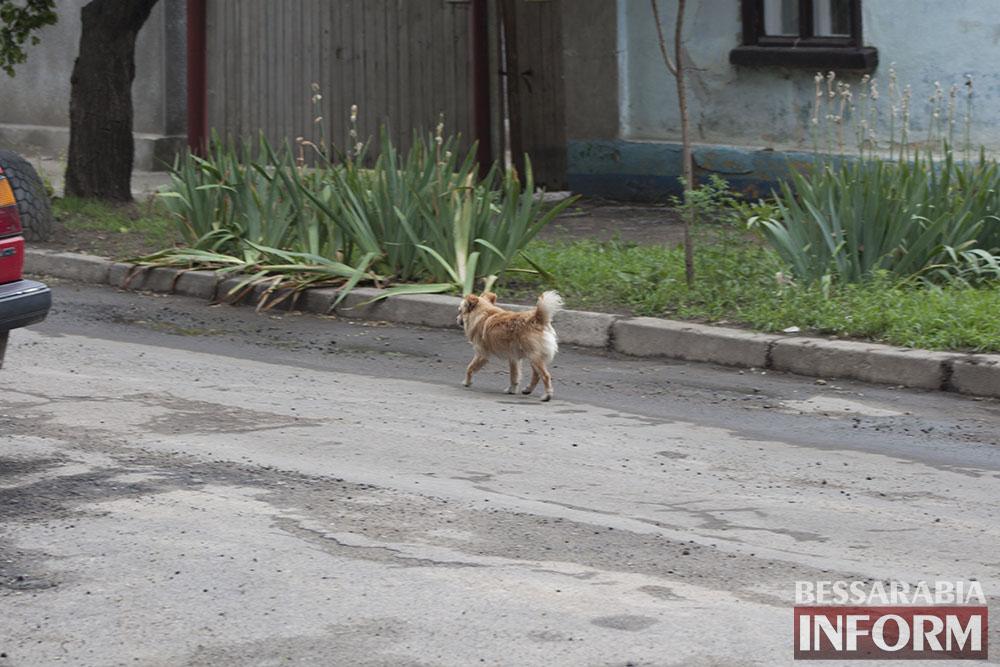 IMG_9571 Проблема бездомных собак в Измаиле пущена на самотек