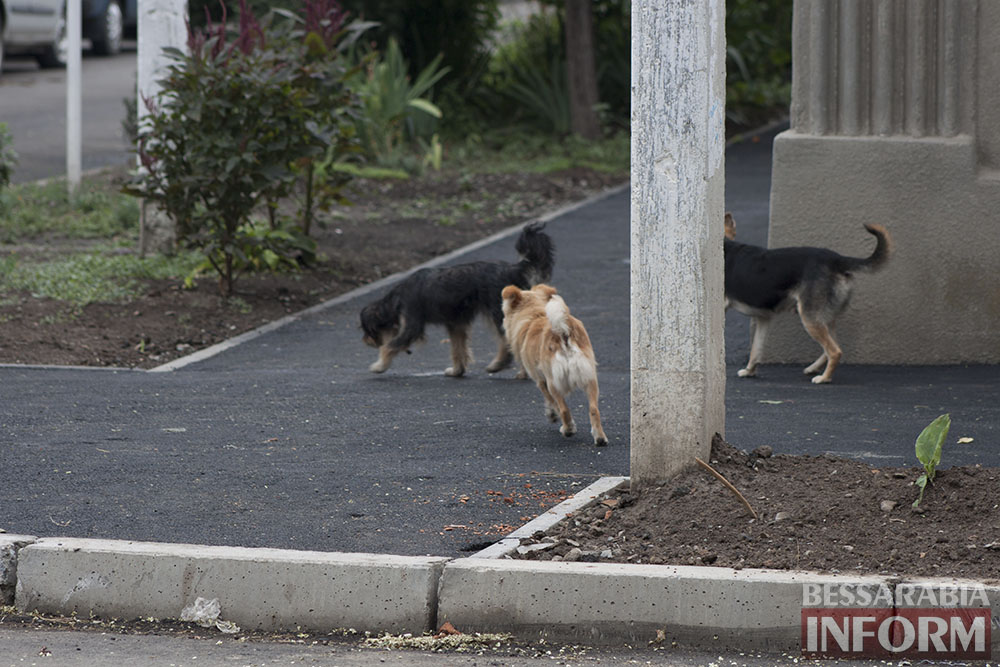 IMG_9572 Проблема бездомных собак в Измаиле пущена на самотек