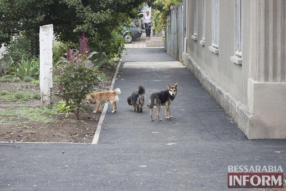 IMG_9574 Проблема бездомных собак в Измаиле пущена на самотек