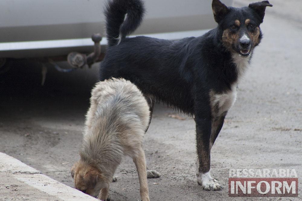 IMG_9580 Проблема бездомных собак в Измаиле пущена на самотек