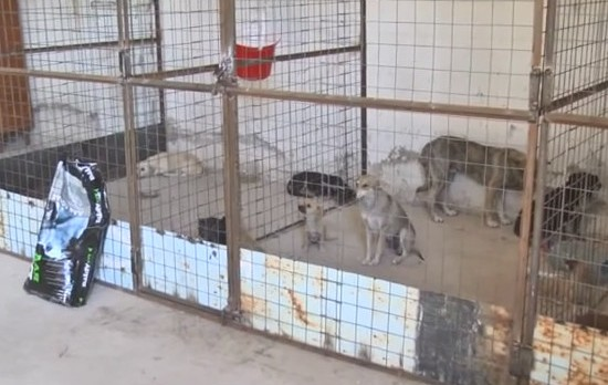 Как в Болграде борются с бездомными собаками