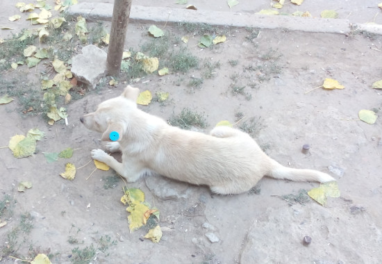 eb15d70391d628036eae6fe68f77962c Как в Болграде борются с бездомными собаками