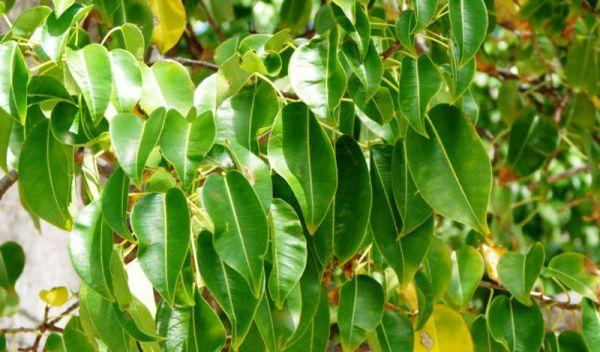 r1 7 самых опасных растений мира