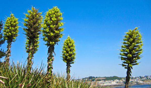 r2 7 самых опасных растений мира