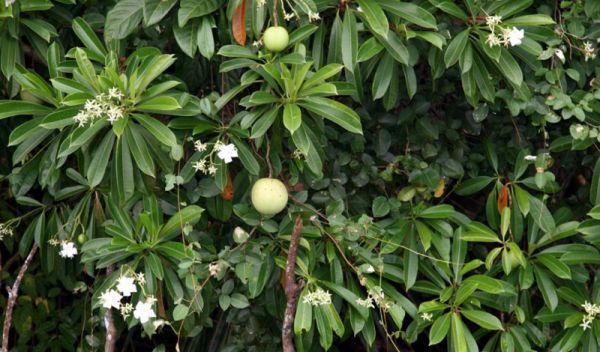 r5 7 самых опасных растений мира