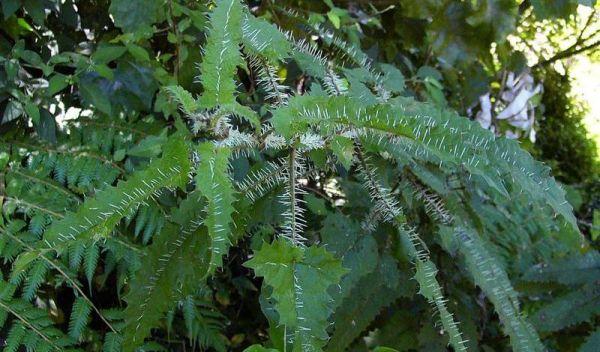 r6 7 самых опасных растений мира