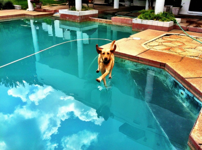 2474460-R3L8T8D-1000-perfectly-timed-dog-photos-a-31 15 фотографий, которые были сделаны за секунду до неизбежного