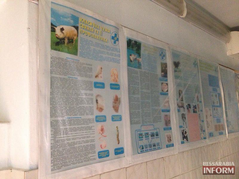 AvvnKD-ZSnY Измаил: африканская чума свиней под контролем