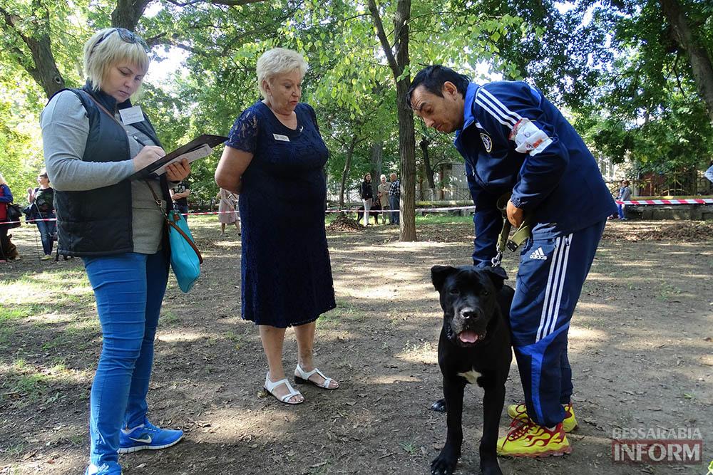 """Племенной смотр собак в Измаиле - первый бал для начинающих """"четвероногих"""" друзей (фото)"""