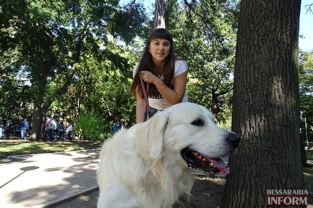 """ITJXL3cvrBQ Племенной смотр собак в Измаиле - первый бал для начинающих """"четвероногих"""" друзей (фото)"""