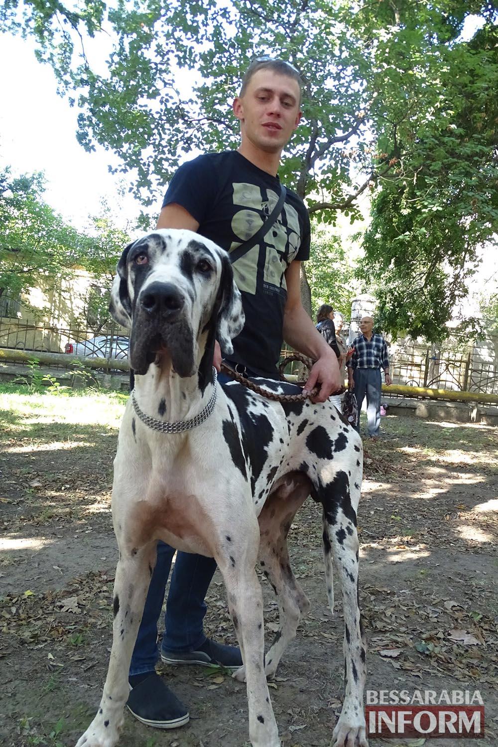 """bdTzJvu1O0s Племенной смотр собак в Измаиле - первый бал для начинающих """"четвероногих"""" друзей (фото)"""