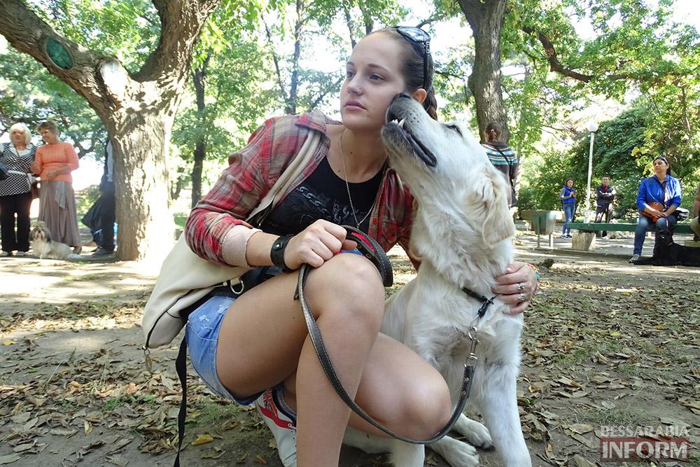 """m_hEnly3QNY Племенной смотр собак в Измаиле - первый бал для начинающих """"четвероногих"""" друзей (фото)"""