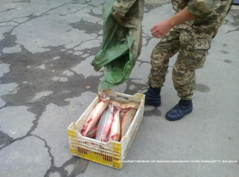news_20151011_115358_1444553638 Измаильские пограничники задержали браконьеров с рыбой, занесенной в Красную книгу (фото, видео)