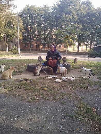 unnamed-11 Измаил: местная жительница стала покровительницей кошек (фото)