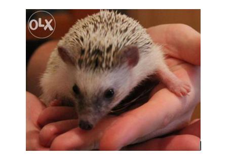 1 Самые необычные и дорогие домашние животные в Одесской области