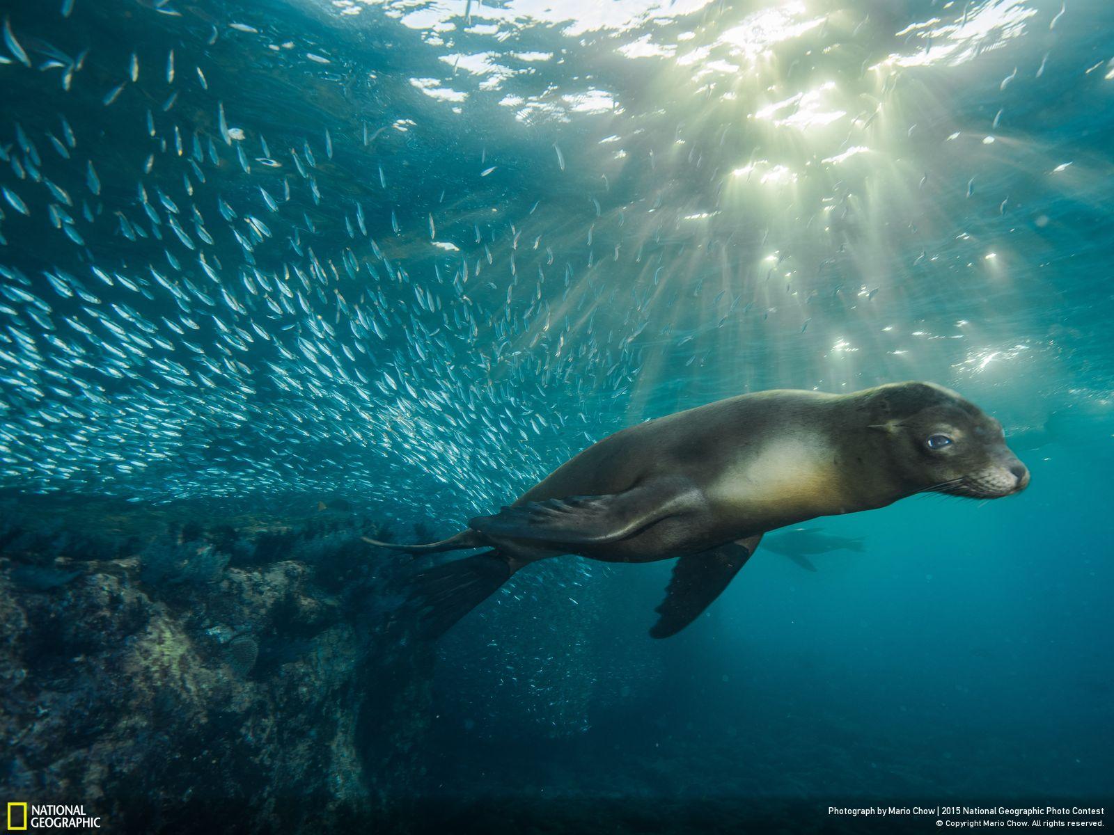 128 Подборка лучших фотографий, опубликованных журналом National Geographic в 2015 году
