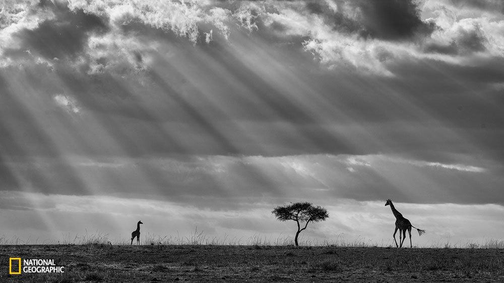 146 Подборка лучших фотографий, опубликованных журналом National Geographic в 2015 году