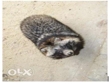 21 Самые необычные и дорогие домашние животные в Одесской области