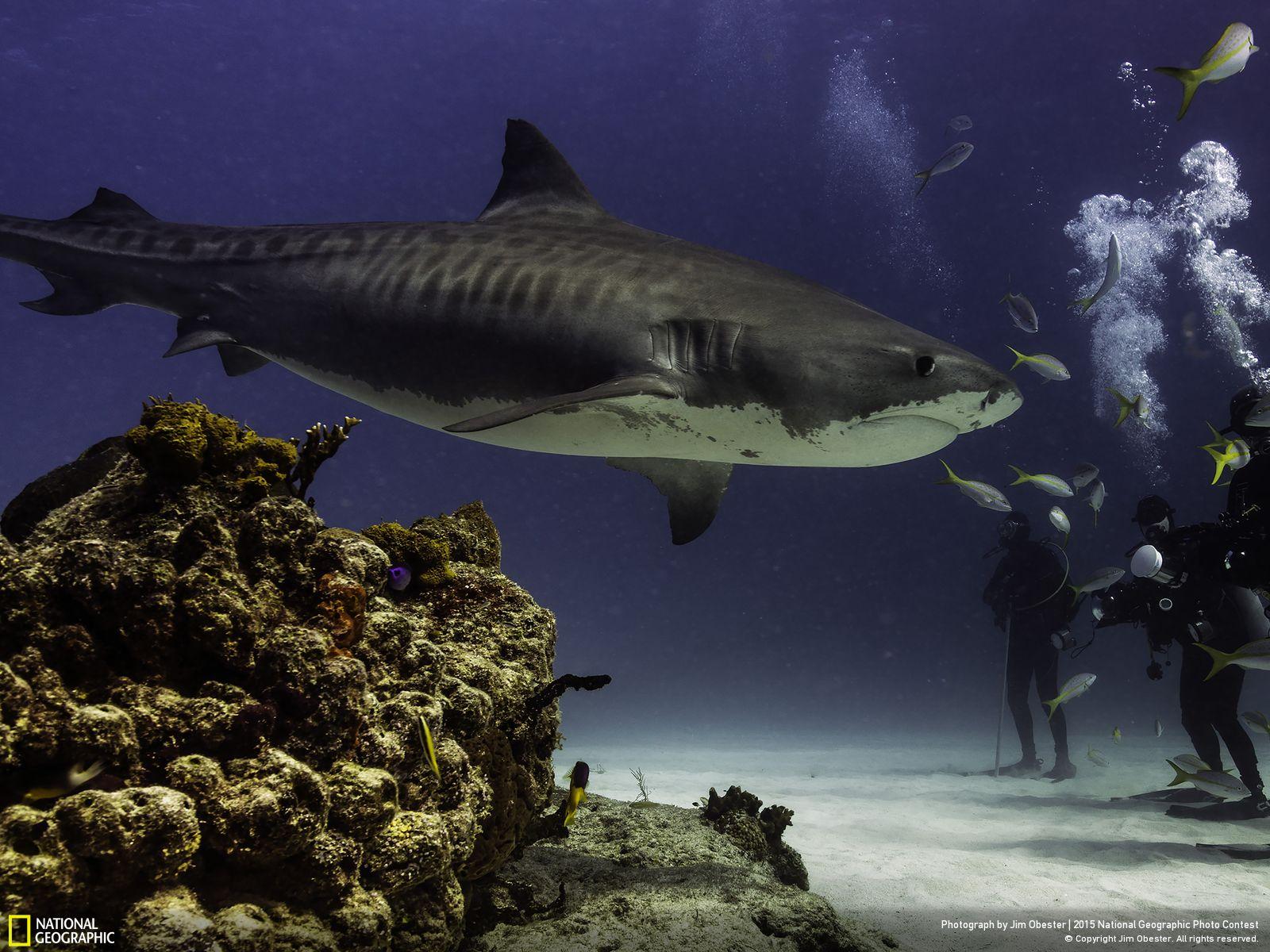 410 Подборка лучших фотографий, опубликованных журналом National Geographic в 2015 году