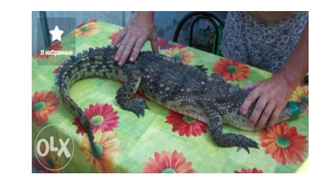 7 Самые необычные и дорогие домашние животные в Одесской области