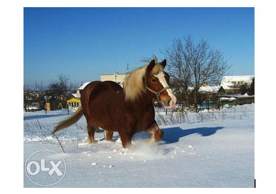 8 Самые необычные и дорогие домашние животные в Одесской области