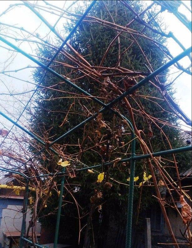 В Измаиле семиметровая елка срочно ищет хозяина (фото)