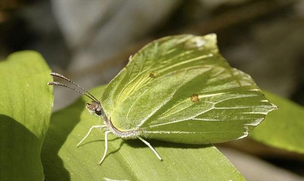 18 25 оптических илюзий, созданных природой