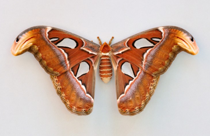 9 25 оптических илюзий, созданных природой