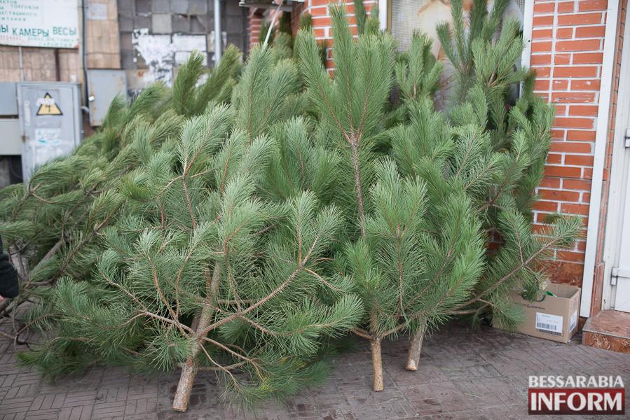 SME_5942 Новый год уже близко - в Измаиле заработали первые ёлочные базары (ФОТО)