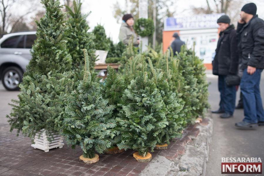 SME_5949 Новый год уже близко - в Измаиле заработали первые ёлочные базары (ФОТО)
