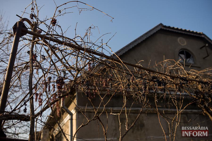"""SME_6185 """"Суровая"""" измаильская зима: цветут цветы и распускаются деревья (фоторепортаж)"""