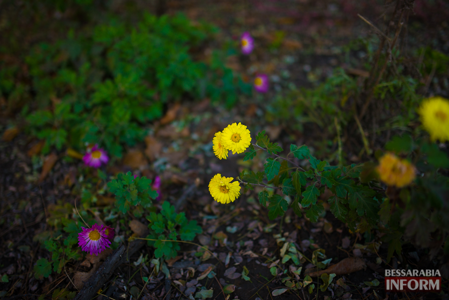 """""""Суровая"""" измаильская зима: цветут цветы и распускаются деревья (фоторепортаж)"""