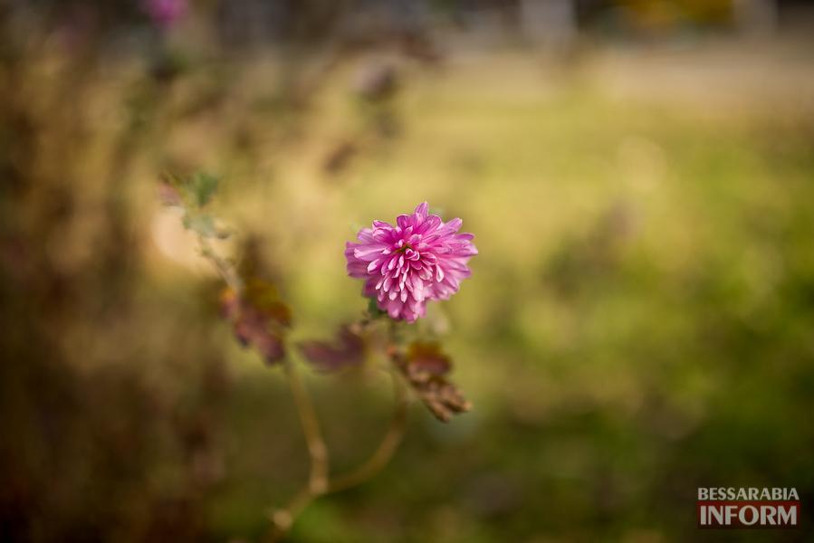 """SME_6359 """"Суровая"""" измаильская зима: цветут цветы и распускаются деревья (фоторепортаж)"""