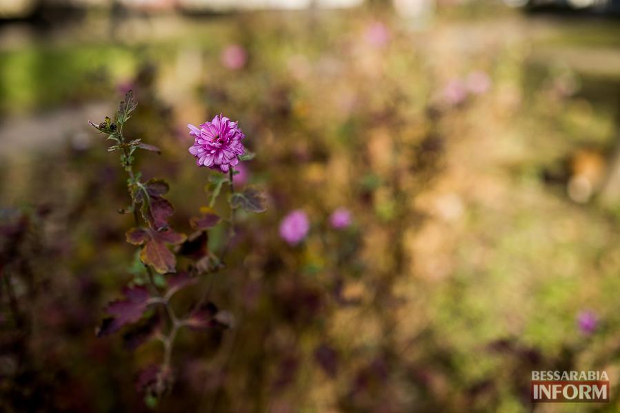 """SME_6361 """"Суровая"""" измаильская зима: цветут цветы и распускаются деревья (фоторепортаж)"""