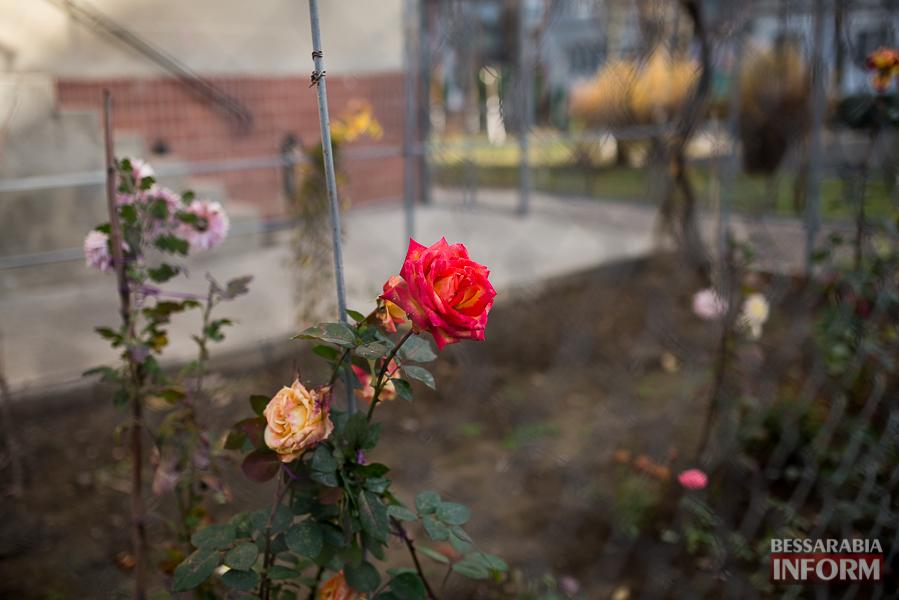 """SME_6367 """"Суровая"""" измаильская зима: цветут цветы и распускаются деревья (фоторепортаж)"""