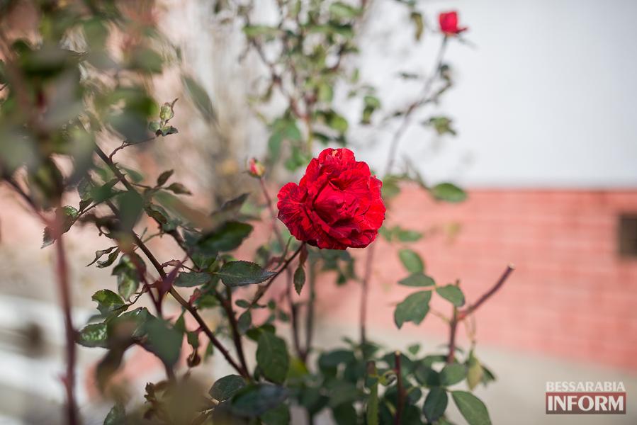 """SME_6390 """"Суровая"""" измаильская зима: цветут цветы и распускаются деревья (фоторепортаж)"""
