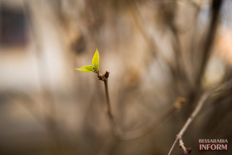 """SME_6391 """"Суровая"""" измаильская зима: цветут цветы и распускаются деревья (фоторепортаж)"""