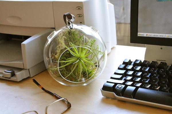 globe-terrarium-office К корпоративу готов: 10 бюджетных подарков для коллег