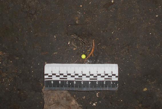 PM162image002 В Измаиле подростку грозит реальный срок за разбойное нападение