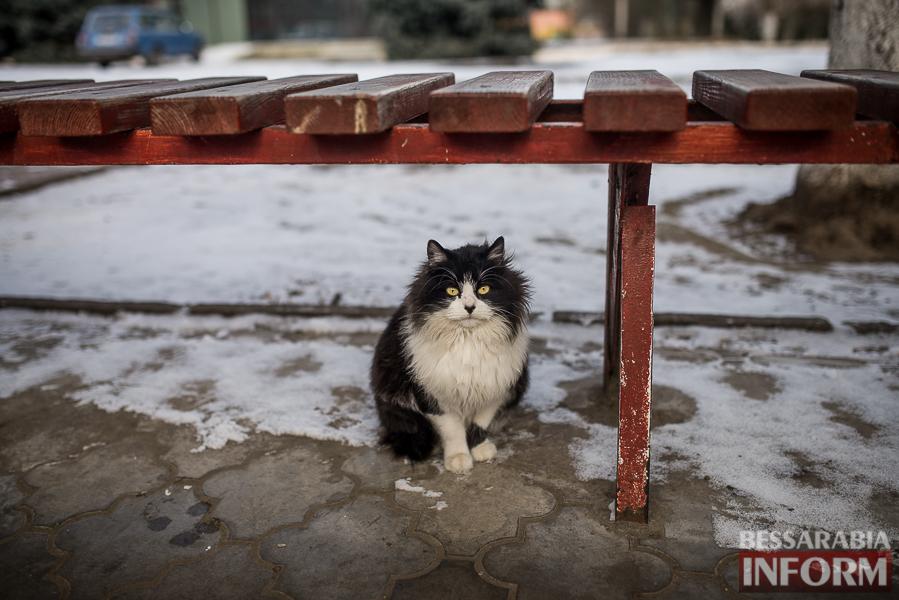 SME_7201 В Измаил пришла настоящая зима (фоторепортаж)